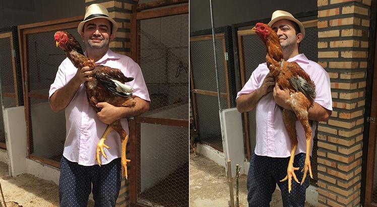 galos_gigantes_galinha01